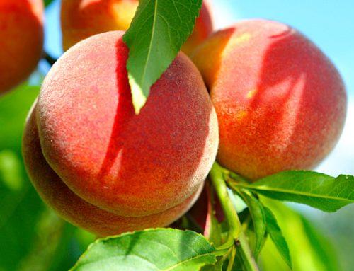 10 egészséges nyári szuperélelmiszer az étrendedbe